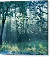 Ashenvale Forest Canvas Print