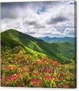Asheville Nc Blue Ridge Parkway Spring Flowers North Carolina Canvas Print