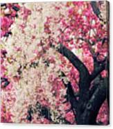 Asian Cherry Vignette Canvas Print