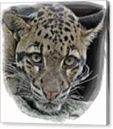 Asian Cloud Leopard Canvas Print