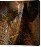 Asian Elephant Closeup Portrait Canvas Print