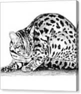 Asian Leopard Cat Canvas Print