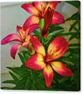 Asian Lilly Spring Time Canvas Print