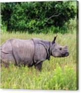 Asian Rhinoceros Canvas Print