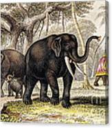 Asiatic Elephant With Young, 19th Canvas Print
