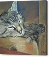 Asleep....in A Box Canvas Print