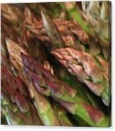 Asparagus Tips Canvas Print