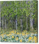 Aspen And Balsam Root Canvas Print