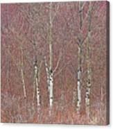 Aspen And Buckbrush Canvas Print