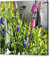 Aspen And Tulips Canvas Print