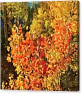 Aspen Colors In Dillon Colorado Canvas Print