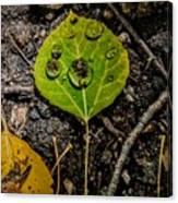 Aspen Dew Canvas Print
