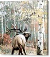Aspen Elk Canvas Print
