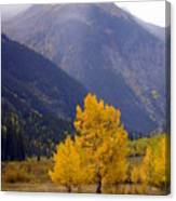Aspen Fall 4 Canvas Print