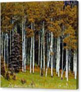 Aspen Fall Digital Canvas Print