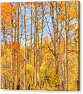 Aspen Fall Foliage Vertical Image Canvas Print