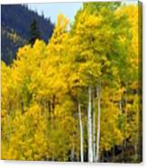 Aspen Fall Canvas Print