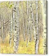Aspen Forest 2 - Photo Painting Canvas Print