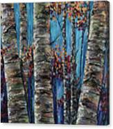 Aspen Forest In The Rocky Mountain Canvas Print