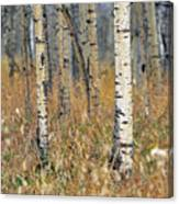 Aspen Forest, Mountain View County Canvas Print