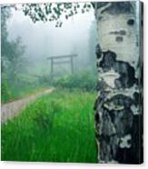 Aspen Gate Mist Canvas Print
