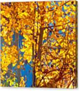 Aspen Glow Autumn Sky Canvas Print