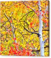 Aspen Gold And Orange Canvas Print