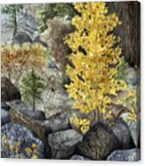 Aspen Gold Canvas Print