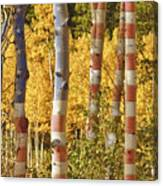 Aspen Gold Red White And Blue Canvas Print