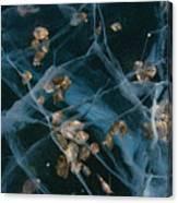 Aspen Leaves Frozen In Lake Canvas Print