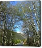 Aspen Lined Road Canvas Print
