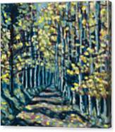 Aspen Path Canvas Print