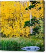 Aspen Pond Canvas Print