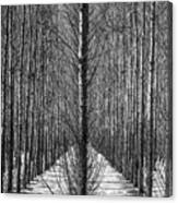 Aspen Rows Canvas Print