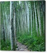 Aspen Trails  Canvas Print