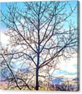 Aspen Tree At Sunset Canvas Print