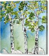 Aspen Trio Canvas Print