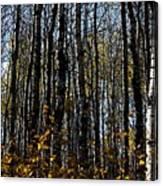 Aspen Trunks 2 Canvas Print