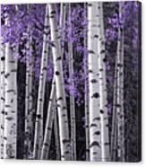 Aspen Trunks Lavender Leaves Canvas Print