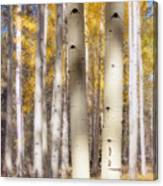 Aspen Trunks Canvas Print