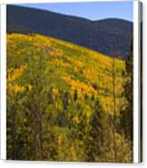 Aspen Vista Canvas Print