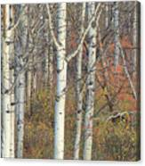 Aspens At Dusk Canvas Print