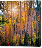 Aspens In Fall Color Canvas Print