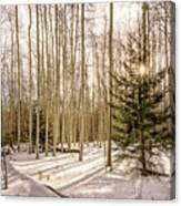 Aspens In Winter 1 - Santa Fe National Forest New Mexico Canvas Print