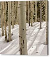 Aspens In Winter 2 Panorama - Santa Fe National Forest New Mexico Canvas Print