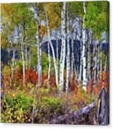 Aspens Meet Autumn Canvas Print