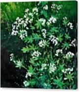 Asperules Canvas Print