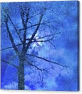 Asphalt-tree Abstract Refection 02 Canvas Print