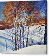 Aspin In The Snow Canvas Print