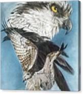 Assail Canvas Print